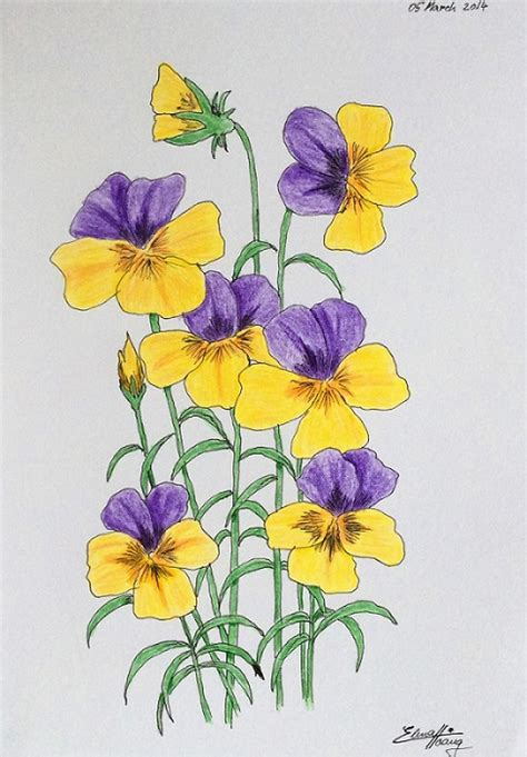 Pansy Flower Drawing at GetDrawings | Free download